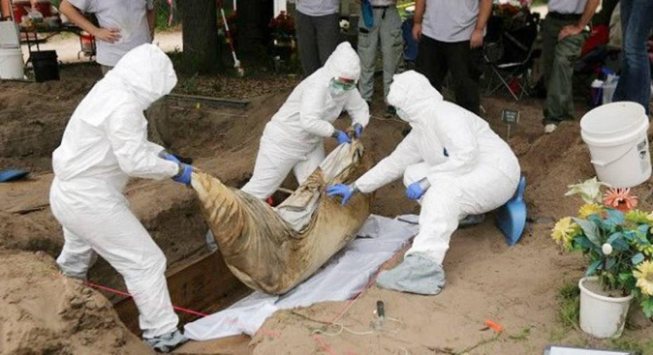 Hallan en fosa común cuerpo de comerciante secuestrado en el Tolima