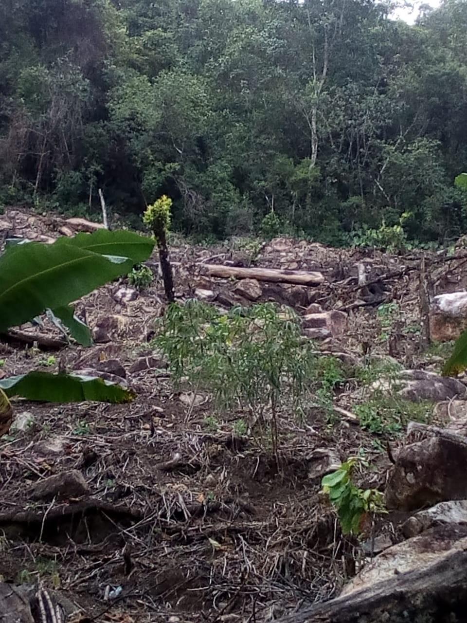 Arrasan bosque para vender lotes piratas en Ibagué