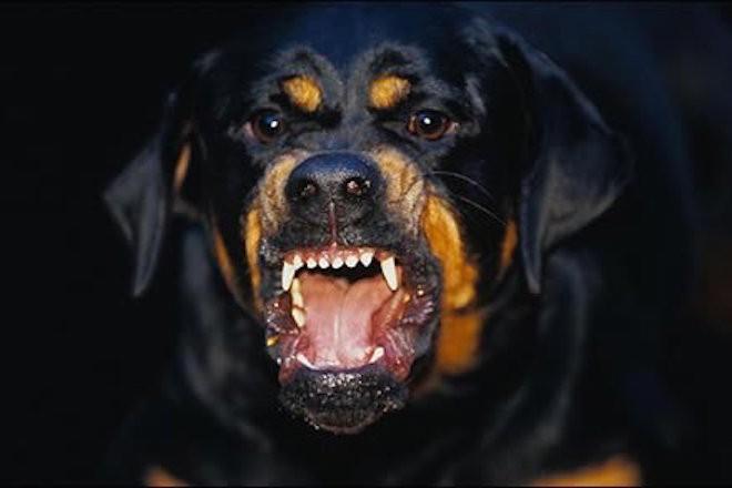 Perro aterroriza habitantes de un barrio en Ibagué, ya atacó a un niño