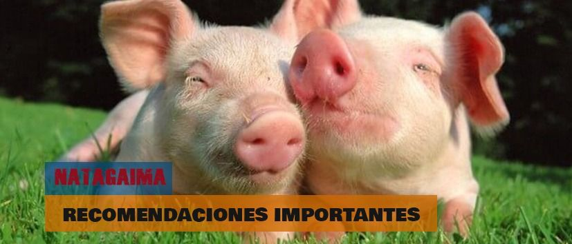Recomendaciones importantes para porcicultores del municipio de Natagaima