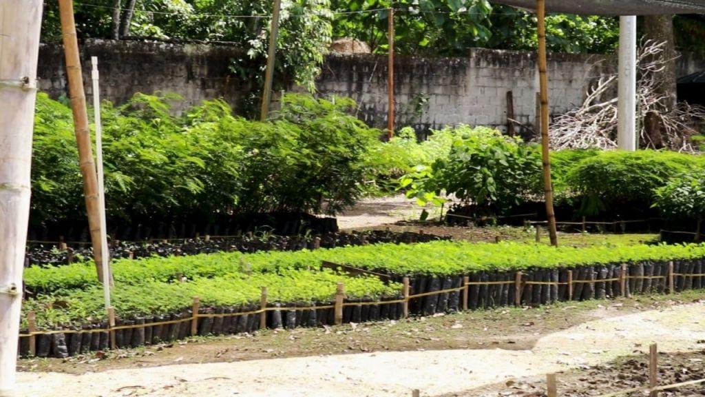 Gobernación piensa recuperar el verde del Tolima