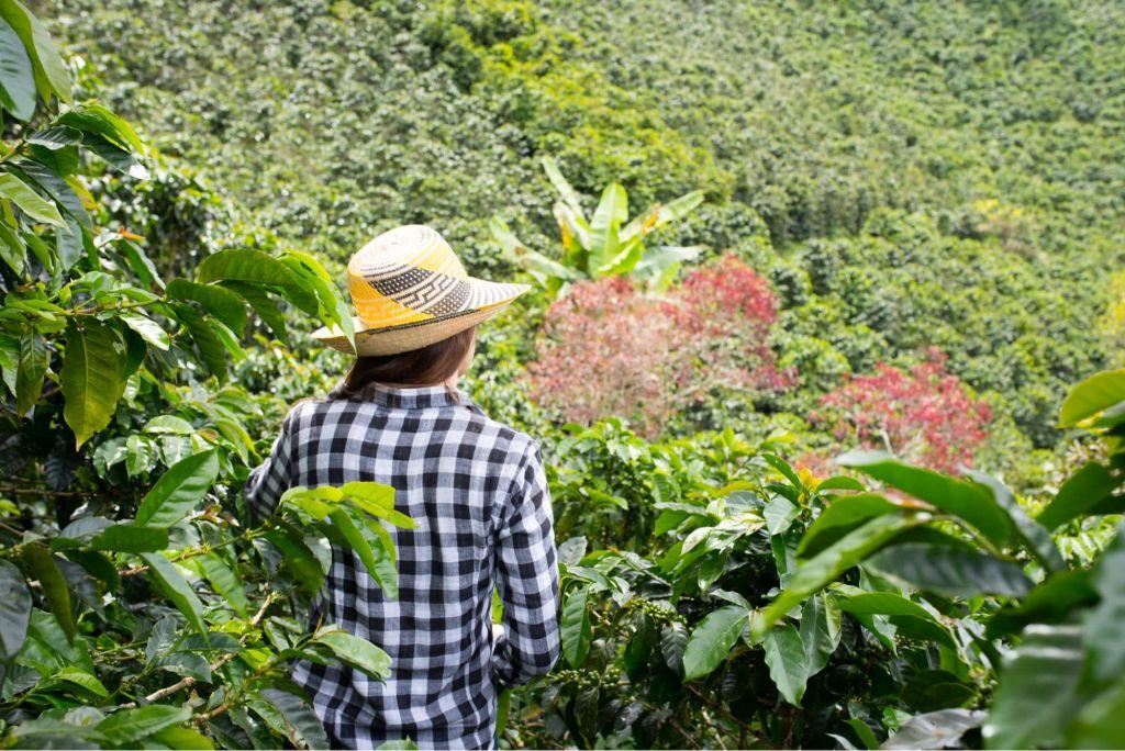 Lucha frontal contra el trabajo infantil, inicia gobernación del Tolima