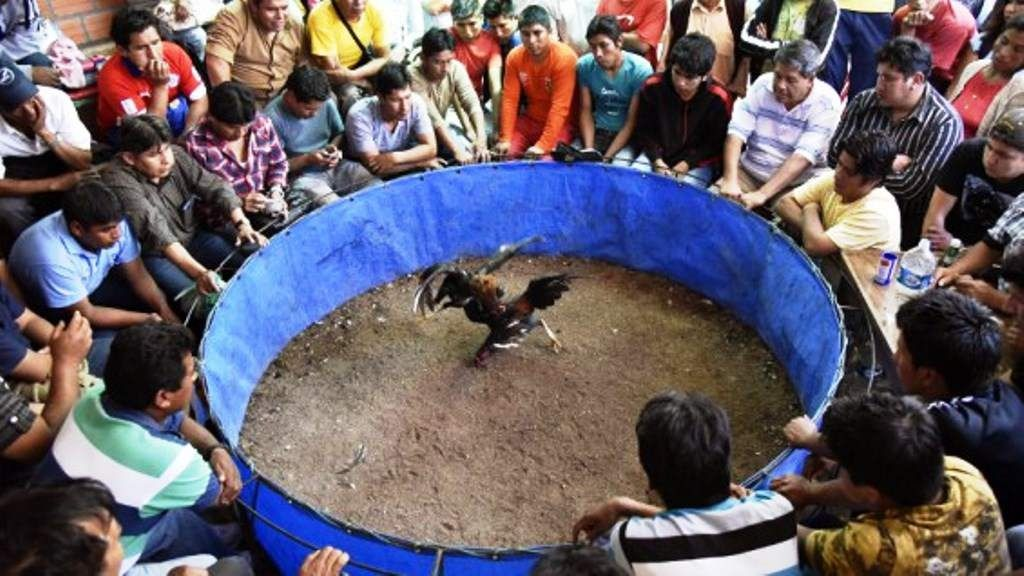 Pelea de gallos terminó en masacre en Planadas Tolima