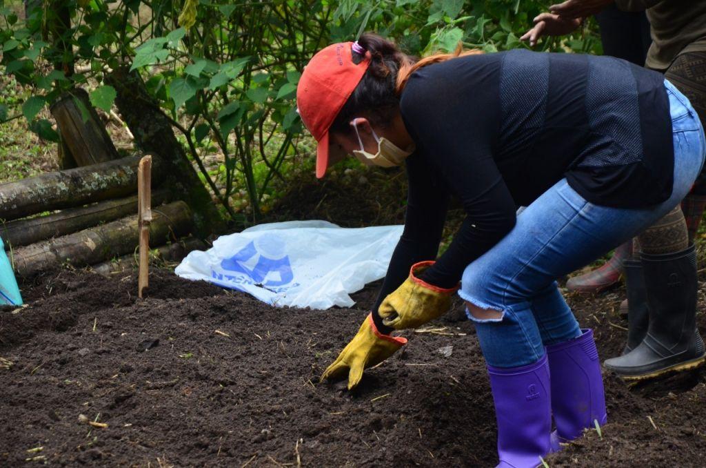 Alcaldía apoya a 33 familias campesinas de Ibagué con huertas caseras
