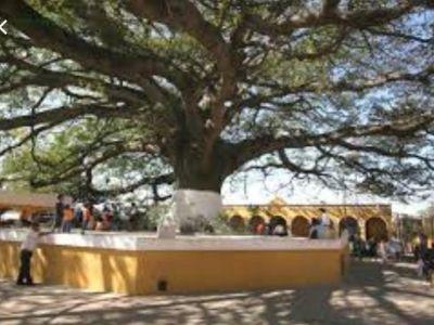 Denuncian licitación plagada de irregularidades, en Suárez Tolima
