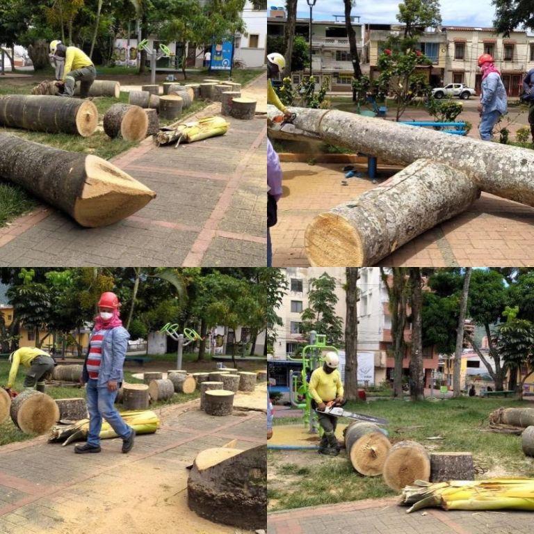 Arboricidio de 'Palmas Botella' en el parque de Belén de Ibagué