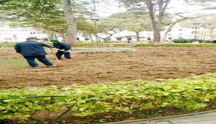 Alcaldía daña zona verde plaza de Bolívar arreglada hace poco